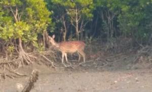 Wild life – Deer